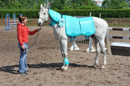 Kôň smagnetoterapeutickým prístrojom Biomag